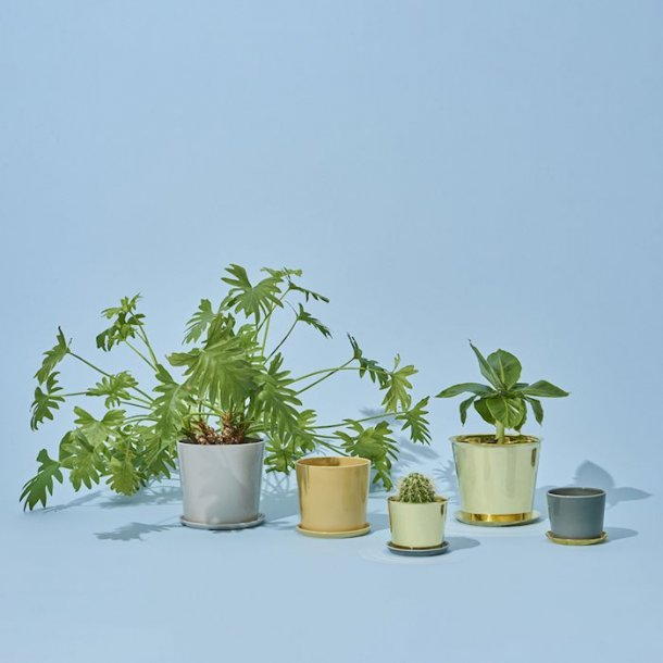 BOTANICAL FAMILY / POTS